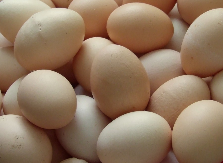 New USDA Egg Safety Rule Leaves Small Producers Behind